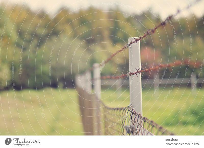 hochsicherheitstrakt Umwelt Natur Landschaft Pflanze Herbst Klima Baum Gras Metall stachelig grün Sicherheit Schutz Grenze eingezäunt Zaun Maschendrahtzaun
