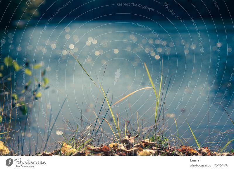 Bärensee 2013 | Halme Natur blau grün Wasser Pflanze Sonne Landschaft ruhig Blatt Umwelt Wärme Herbst See Schönes Wetter Seeufer