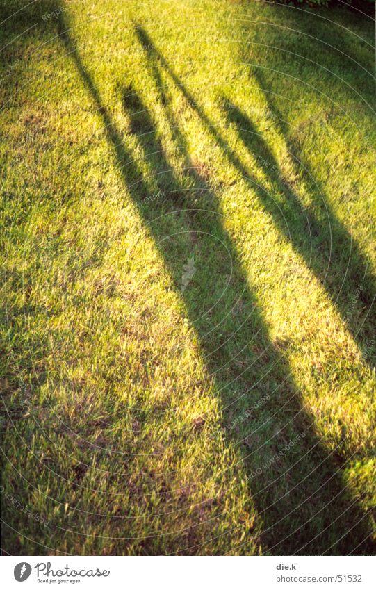 schattentanz Mensch 2 Wiese Licht Lichtspiel Gras grün grasgrün gelb jauchzen Freude fantastisch toben springen Bewegung Außenaufnahme Momentaufnahme Sommer