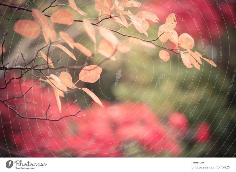 Licht und Farbe Natur Herbst Baum Sträucher Blatt herbstlich Herbstlaub Herbstfärbung Herbstbeginn Beginn Vergänglichkeit Wandel & Veränderung Farbfoto