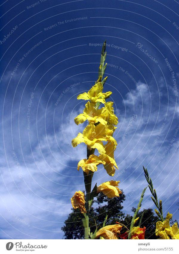 hoch hinaus Blume gelb Blüte Wolken Park ökologisch Fingerhut Glockenblume Garten Natur Himmel Detailaufnahme Farbe blau