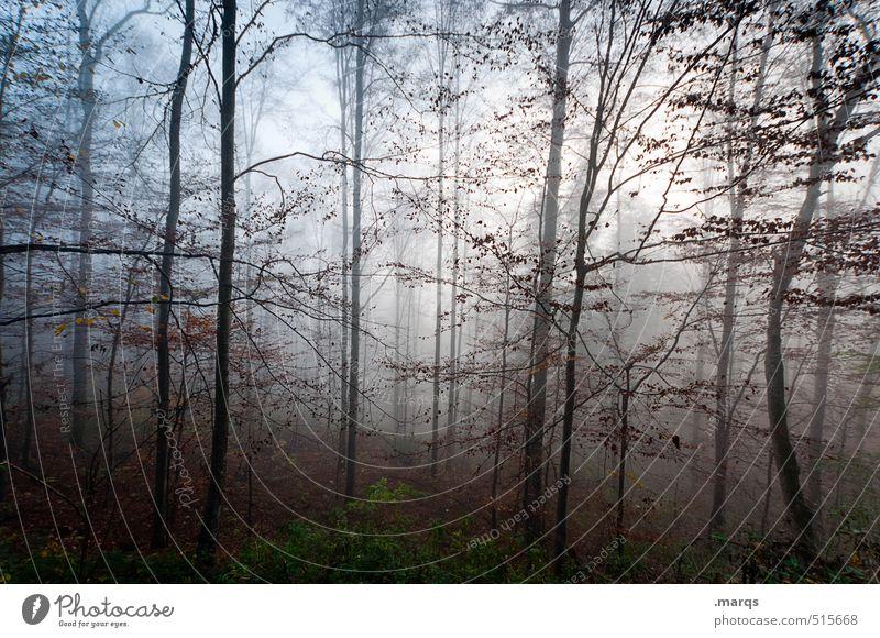 Dickicht Natur schön Landschaft Wald Umwelt Leben Herbst Stil Stimmung Idylle Nebel Lifestyle Klima Ausflug Vergänglichkeit Wandel & Veränderung