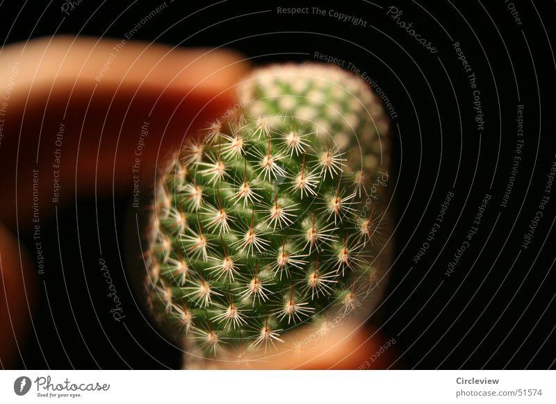 Genau hingesehen... grün Pflanze schwarz Finger Spitze Topf Linse Kaktus Lupe Stachel Zimmerpflanze