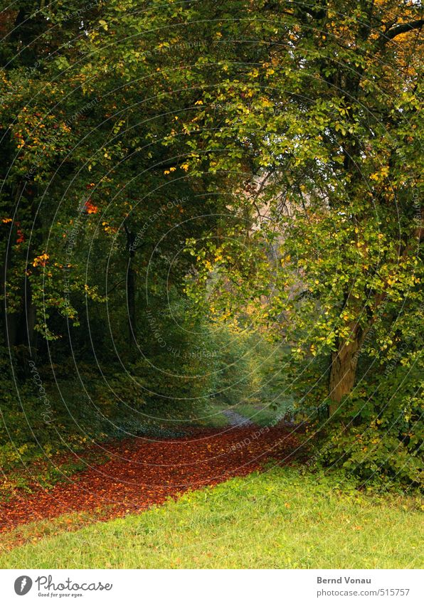 Roter Teppich Natur Landschaft Herbst Pflanze Baum Gras Sträucher Blatt Grünpflanze Wege & Pfade Stimmung grün rot gelb natürlich Herbstlaub Wald Wiese schön