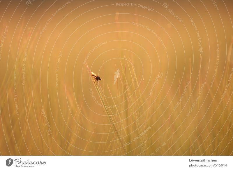 ... lost and still waiting Natur Getreide Feld Tier Fliege 1 hocken sitzen hell klein gelb grün orange Einsamkeit stagnierend warten verloren Farbfoto