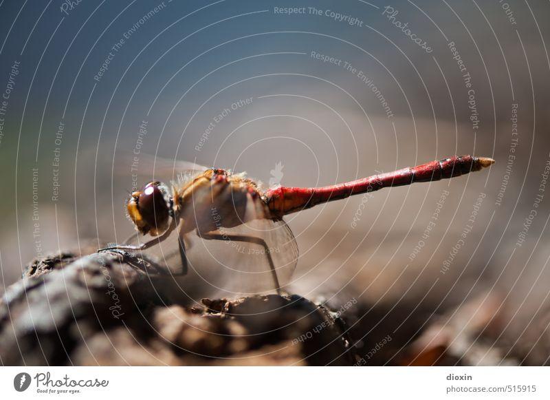 Lake Bears 2013 | One Step Closer To You Umwelt Natur Tier Sonnenlicht Wildtier Flügel Libelle Libellenflügel Insekt Facettenauge hocken sitzen klein natürlich