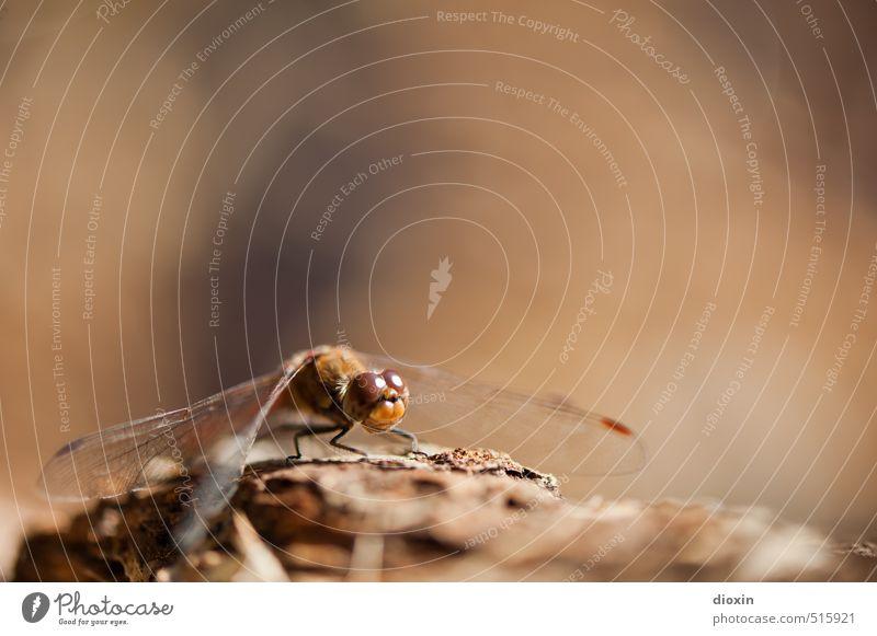 Lake Bears 2013 | Here´s to Now Umwelt Natur Tier Sonnenlicht Wildtier Flügel Libelle Libellenflügel Insekt Facettenauge hocken sitzen klein natürlich Farbfoto