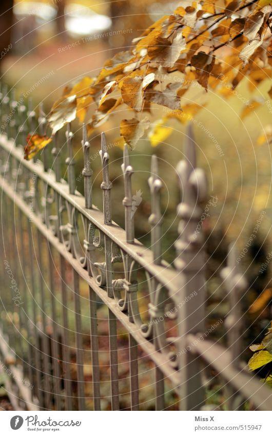 Herbst Garten Schönes Wetter Blatt mehrfarbig Zaun Schmiedeeisen Ast Zweig herbstlich Herbstlaub Herbstfärbung Herbstbeginn Spitze Farbfoto Außenaufnahme