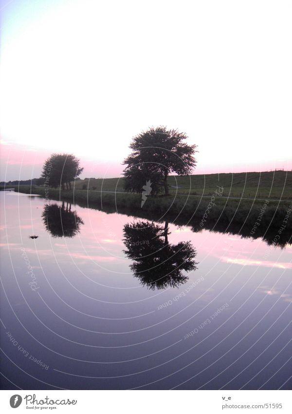 spiegelung Wasser Himmel Baum ruhig violett Klarheit