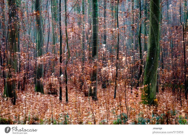 Noch so ein Herbst Natur schön Farbe Landschaft Wald Umwelt Stil außergewöhnlich Freizeit & Hobby Lifestyle Design Sträucher Geschwindigkeit Ausflug