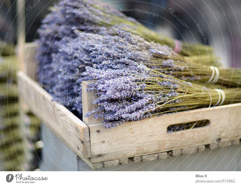 Lavendel Kräuter & Gewürze Ernährung Italienische Küche Blume Blatt Blüte Blühend Duft dehydrieren violett Küchenkräuter Wochenmarkt Gemüsemarkt verkaufen Ernte