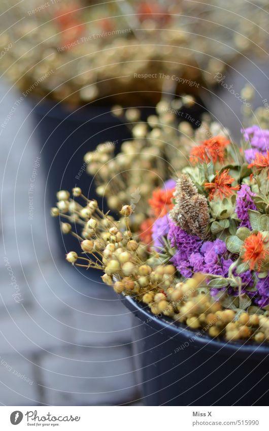 Zwiebelmarkt Weimar kaufen Herbst Blume Blüte Blühend Duft trocken mehrfarbig Weimarer Zwiebelmarkt Blumenstrauß Trockenblume Eimer Wochenmarkt Blumenhändler