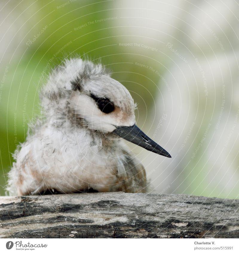 Warten Natur grün Einsamkeit ruhig Tier Tierjunges grau Holz klein Denken braun Vogel Kindheit sitzen Wildtier warten