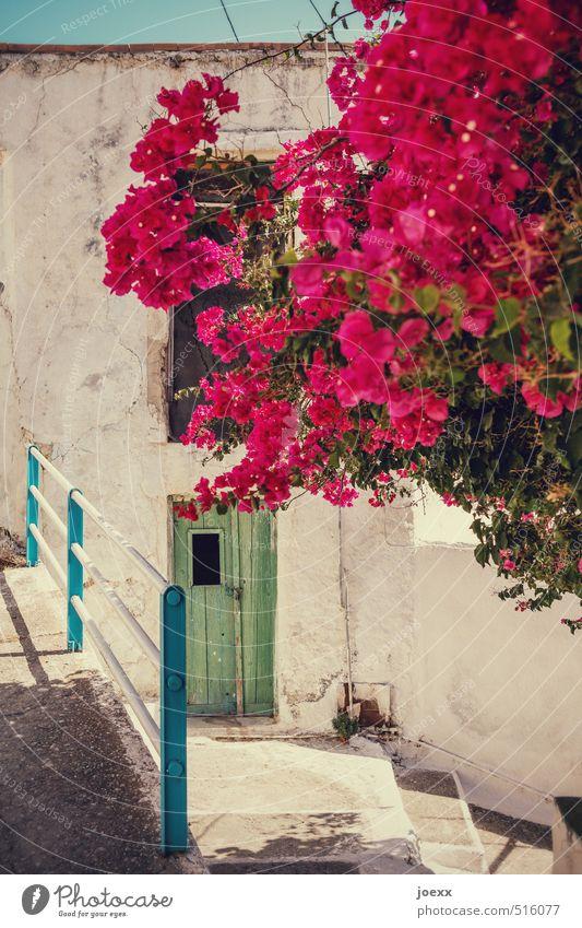 Blumenstrauß Himmel blau alt schön grün weiß Pflanze Sommer Sonne Wärme Wand Mauer Blüte rosa Treppe Tür