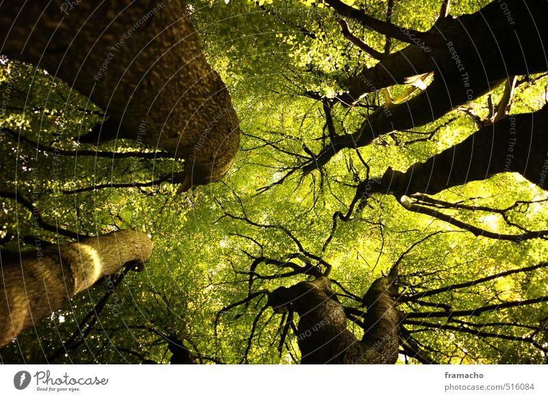 oben Natur Pflanze grün schön Sommer Baum Landschaft Blatt Wald Umwelt Gesundheit Holz braun Zufriedenheit elegant