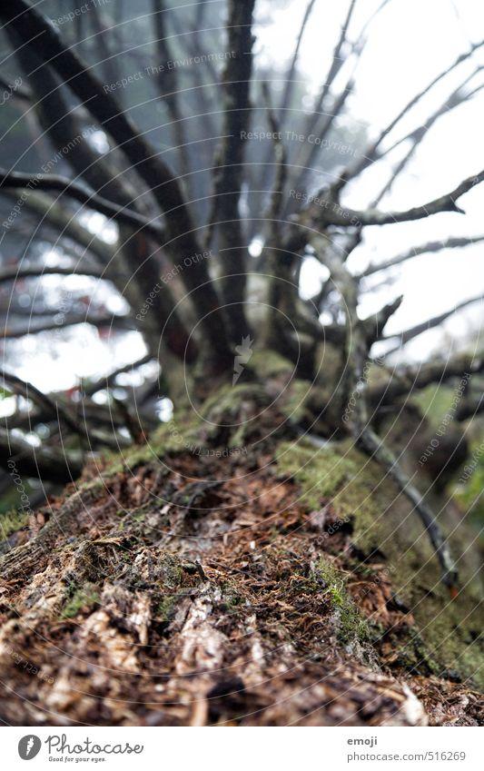 morsch Natur Pflanze Baum Umwelt natürlich braun Baumrinde