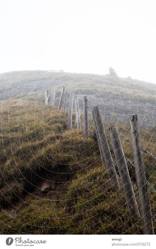 Aufstieg Umwelt Natur Landschaft Herbst schlechtes Wetter Nebel Gras Feld Hügel gruselig natürlich grau grün Zaun Farbfoto Gedeckte Farben Außenaufnahme