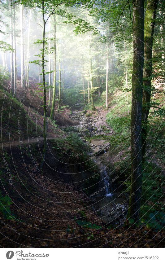Bach Natur grün Pflanze Baum Landschaft Wald Umwelt natürlich fantastisch Grünpflanze Märchenwald