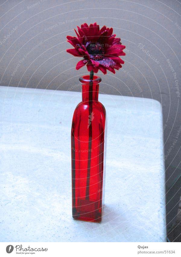 Rot rot Sommer Blume Gefühle Glück Wärme Frühling Erfolg Tisch Hoffnung Romantik Physik positiv Lust Vase Blumenvase