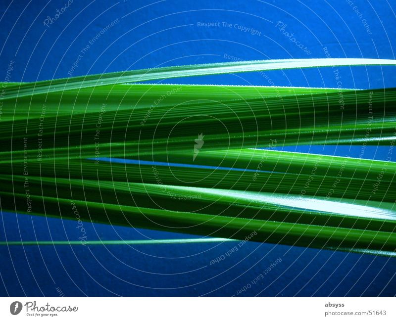 BlueGrass Natur grün blau Pflanze Streifen