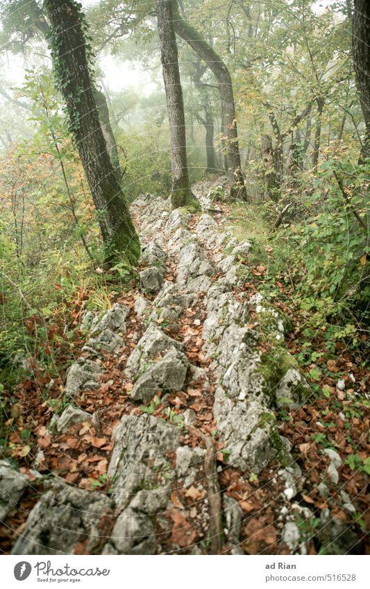 Steinig ist der Weg auf dem wir gehn! Natur Tier Herbst schlechtes Wetter Nebel Regen Pflanze Baum Sträucher Blatt Grünpflanze Wildpflanze Wald Hügel Felsen