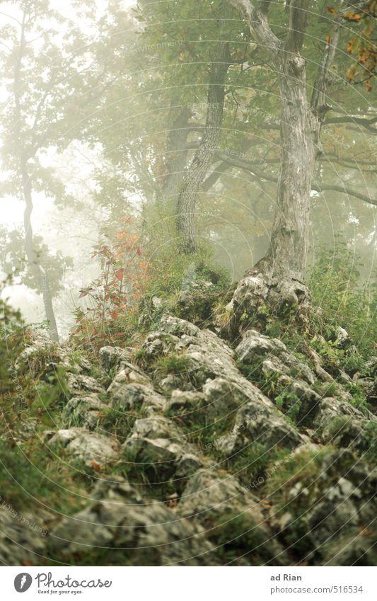 Mystic Wood Umwelt Natur Landschaft Herbst Nebel Pflanze Baum Sträucher Wald Hügel Felsen Abenteuer mystisch Traurigkeit unheimlich verträumt Gespensterwald