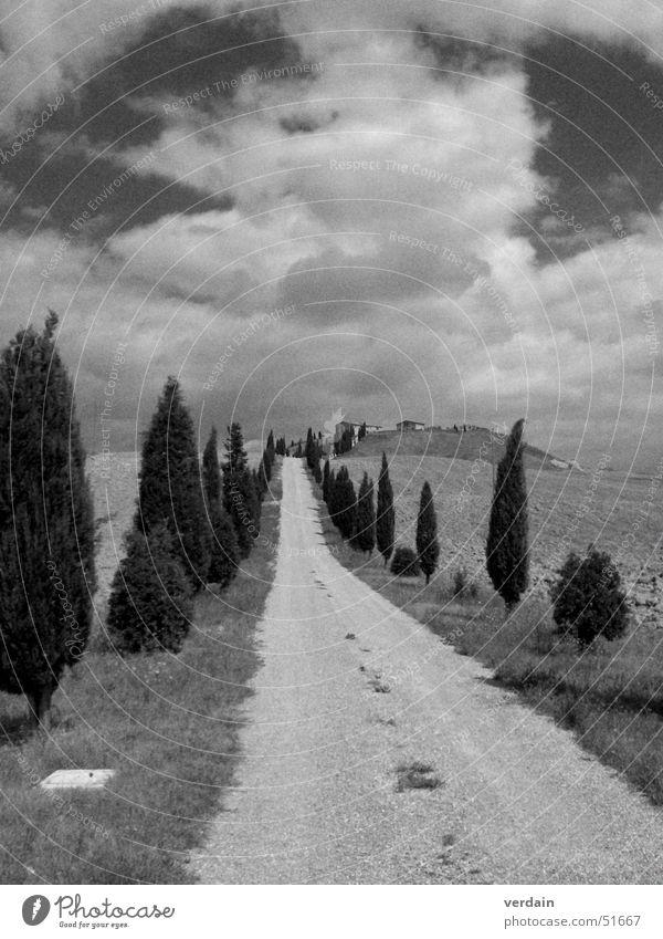 a long way Toskana Feld Zypresse Wolken schwarz weiß staubig Außenaufnahme Wege & Pfade Straße Berge u. Gebirge Ziel Ferne