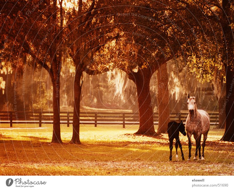 Springtime Foal Wiese Pferd