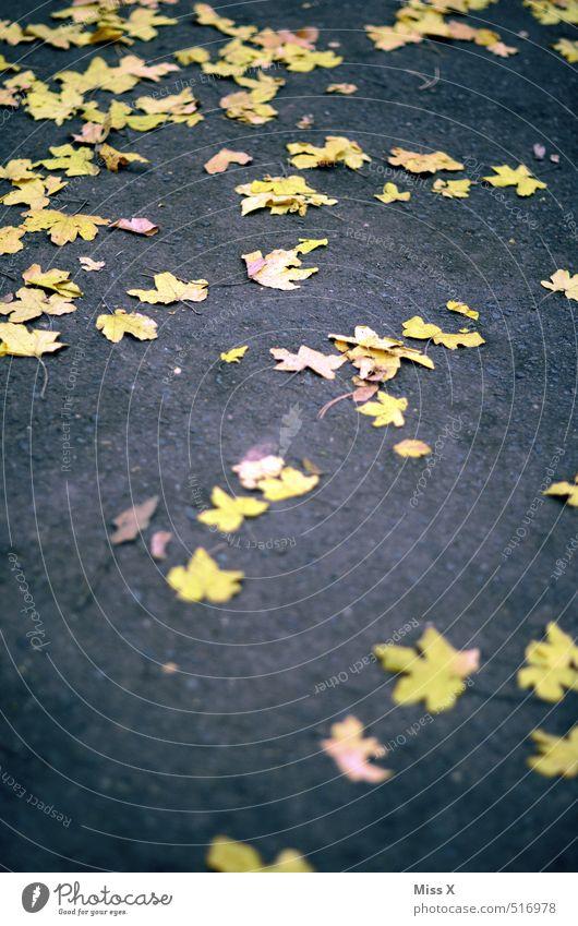 gelbe Sterne Herbst Blatt Straße Wege & Pfade liegen Rutschgefahr Asphalt Bürgersteig Ahornblatt Herbstlaub Herbstfärbung Farbfoto Außenaufnahme Muster