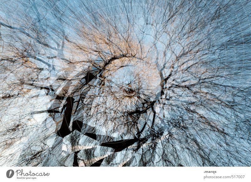 B-B-Baum Himmel Natur schön Umwelt Herbst außergewöhnlich Kunst Klima Wachstum Perspektive verrückt Vergänglichkeit Wandel & Veränderung Ast viele