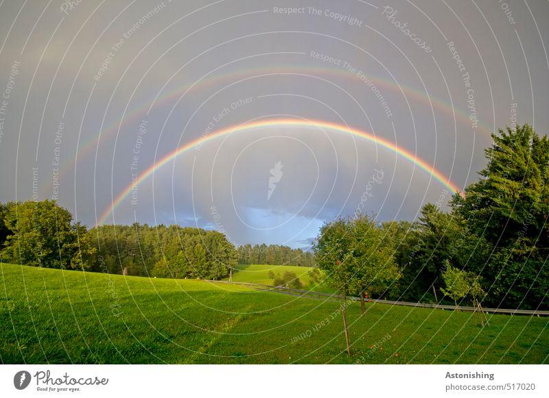 doppelter Bogen Umwelt Natur Landschaft Pflanze Luft Wasser Himmel Wolken Gewitterwolken Sommer Wetter Schönes Wetter Regen Baum Gras Sträucher Wiese Feld Wald