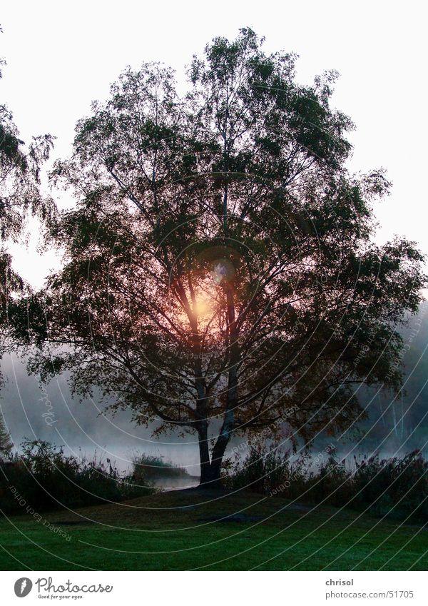 Morgenstimmung am Silbersee Baum ruhig Einsamkeit Herbst Nebel Hoffnung Frieden Gewässer