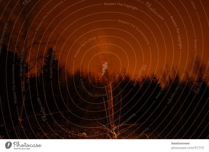 Geister im Wind Baum dunkel Wind gruselig Leidenschaft Geister u. Gespenster glühen