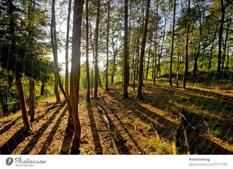 Wald in der Abendsonne Umwelt Natur Landschaft Pflanze Luft Himmel Sonne Sonnenaufgang Sonnenuntergang Sonnenlicht Herbst Wetter Schönes Wetter Wärme Baum Gras