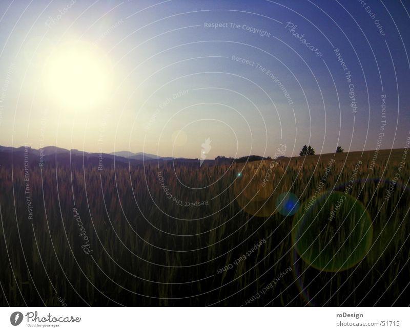 Landschaft mit Sonne Himmel Getreide