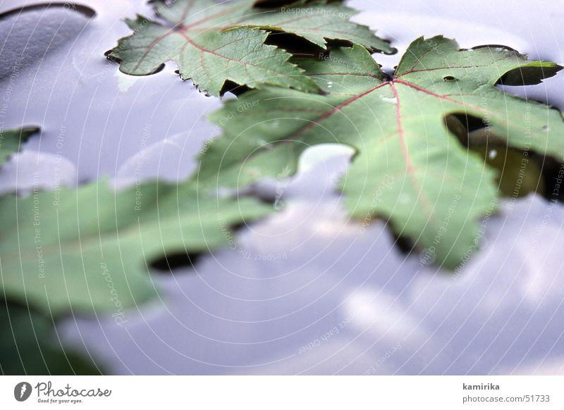 nasskalt Herbst Blatt Ahorn Ahornblatt Pfütze Wasser Wassertropfen Stein