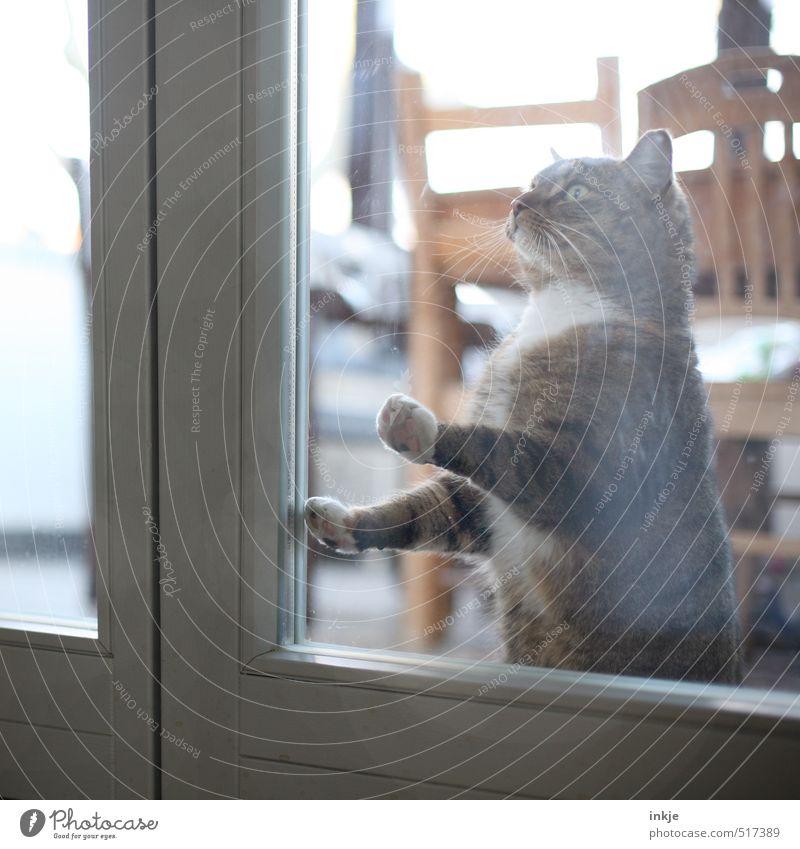 Zeitumstellung | lasst mich rein!!! Katze Tier Fenster Gefühle Stimmung Zusammensein Wohnung Raum Häusliches Leben warten Warmherzigkeit Hoffnung Neugier Wunsch