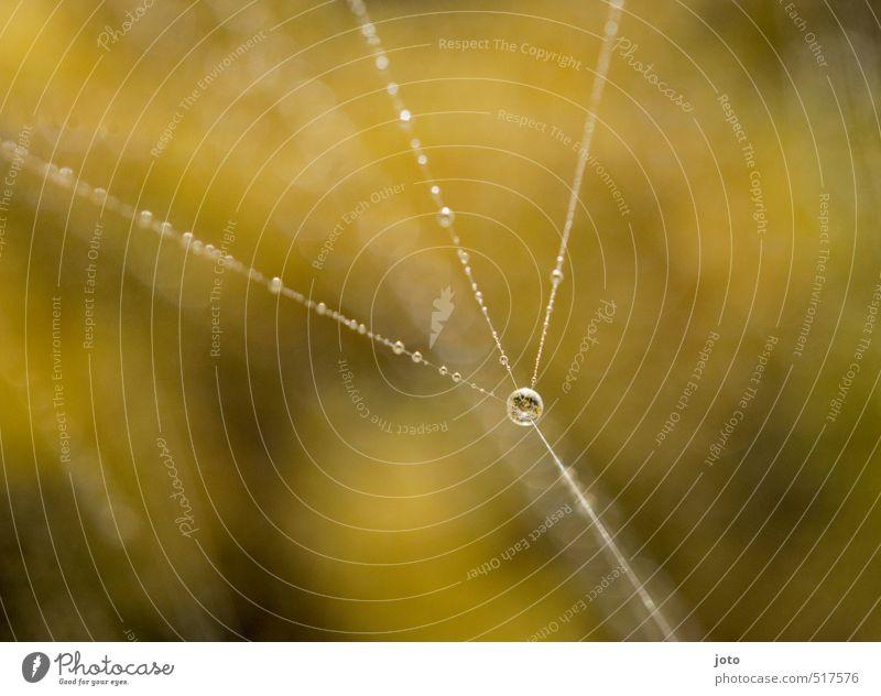 herbststimmung Natur Wassertropfen Herbst Spinnennetz ästhetisch elegant glänzend schön stark ruhig standhaft Stress einzigartig Zufriedenheit Leichtigkeit
