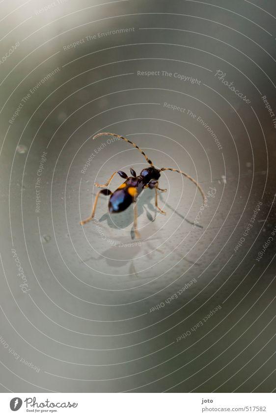 im spotlight Natur Einsamkeit Tier orange Wassertropfen niedlich beobachten Coolness berühren Boden Neugier Insekt entdecken Surrealismus frech Käfer