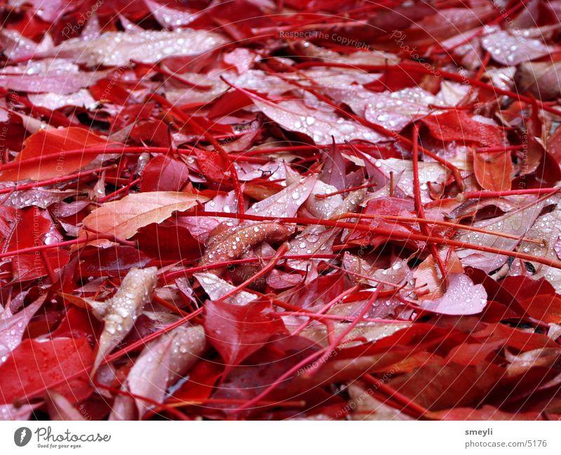 roter oktober Blatt Herbst Wassertropfen Herbstlaub Weinblatt Oktober September Park Delikt Jahrezeit herbstlich Natur