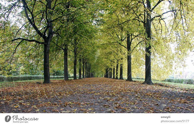 wohin gehn Baum Herbst Allee Blatt Linde Buche Zukunft Horizont grün Symmetrie Garten Park Wege & Pfade Straße Landschaft