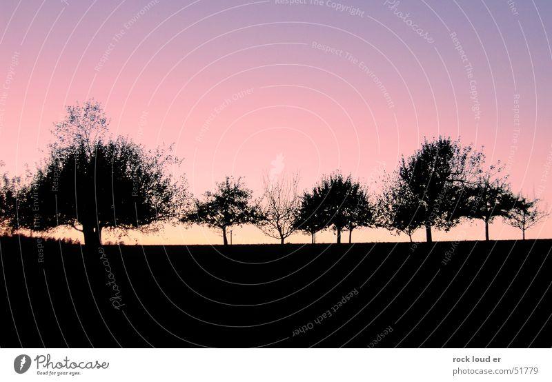 Landschaftskonterfile [Bäume] Baum schwarz dunkel rot gelb Sonnenuntergang Abenddämmerung blau Kontrast Detailaufnahme Natur