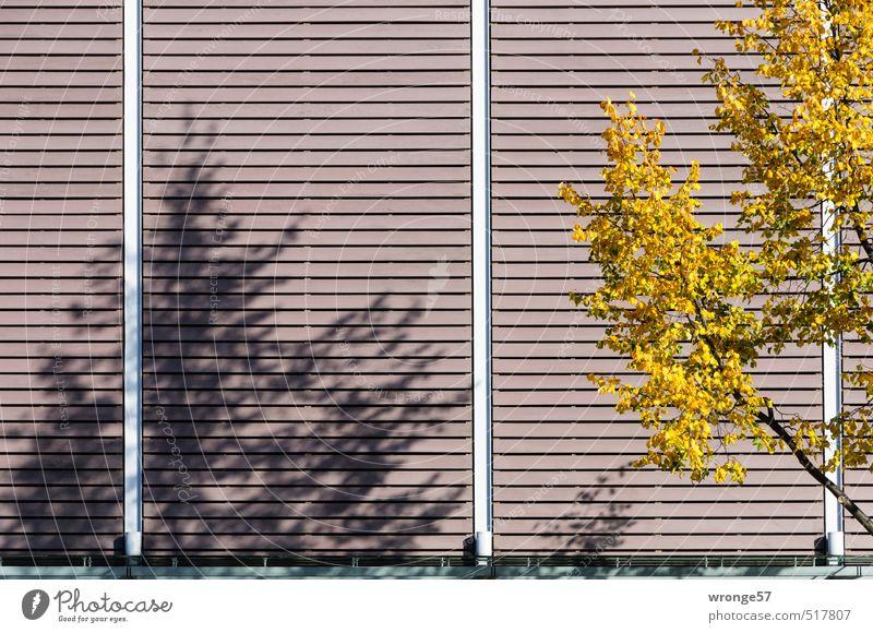 Der Herbst wirft Schatten Baum Blatt Fassade Fassadenverkleidung braun mehrfarbig gelb Herbstlaub herbstlich Ast Laubbaum Schattenspiel Gebäudeteil Farbfoto
