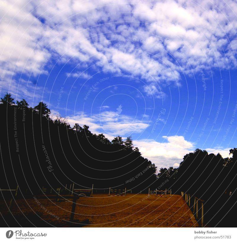 schattiger reitplatz Himmel weiß blau Wolken Wald dunkel Reitsport