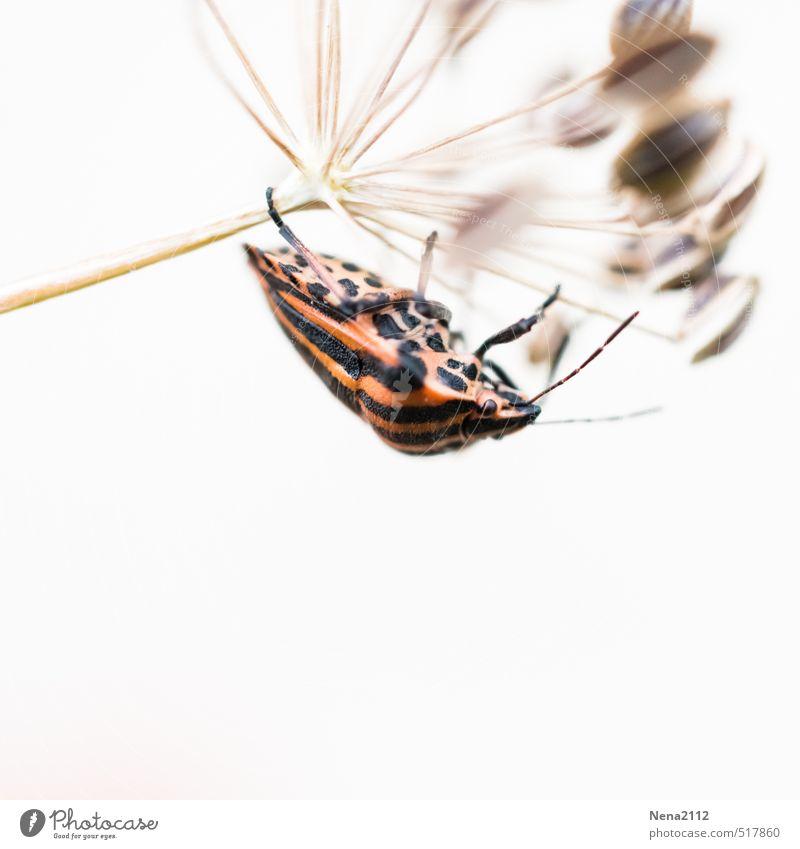 Hängend Natur weiß Pflanze Sommer Tier Umwelt Wiese Herbst Garten Luft Feld Sträucher Insekt hängen gestreift krabbeln
