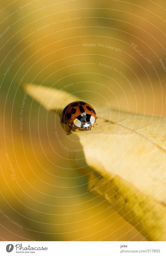 herbsterkundung Natur rot Erholung ruhig Blatt Tier gelb Umwelt Herbst Wege & Pfade klein Garten Park Zufriedenheit Warmherzigkeit niedlich