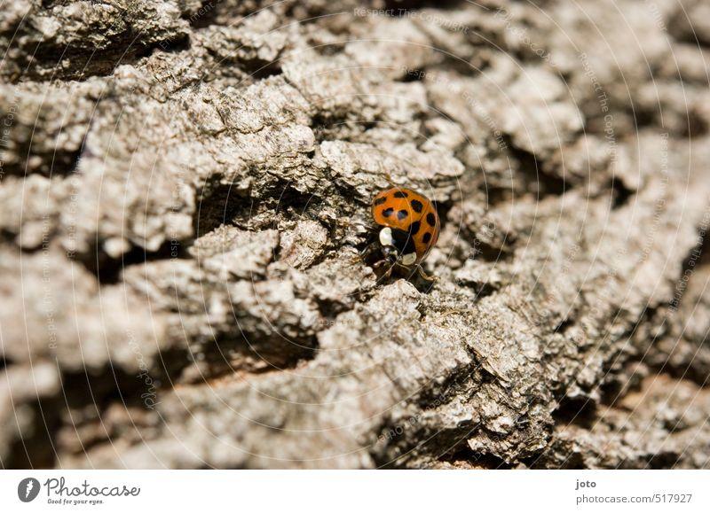 baumwanderung Natur Baum rot Tier Bewegung Herbst Freiheit klein wandern Ausflug niedlich Abenteuer rund Punkt Ziel Klettern