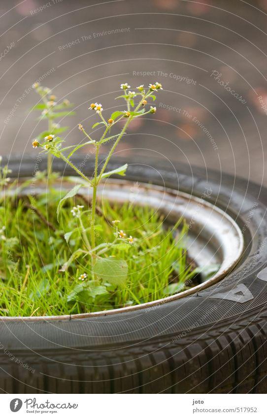 Guerilla Gardening Umwelt Sommer Pflanze Blume Gras Sträucher Wildpflanze Topfpflanze Garten Wachstum Duft natürlich niedlich trösten Leben Ordnungsliebe