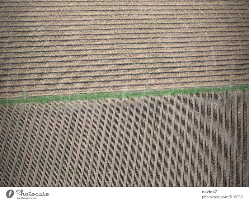 Zen Umwelt Landschaft Erde Herbst Dürre Feld Ackerboden Ackerbau Sand Wachstum braun grün diszipliniert Ordnungsliebe Ernte Gedeckte Farben Außenaufnahme
