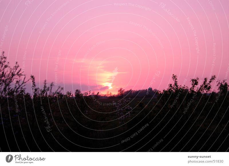 Ostfriesen Sunset Sonnenuntergang Ostfriesland Sommer
